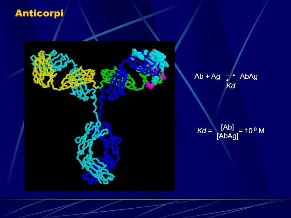 Anticorpi Ab + Ag AbAg Kd Kd = = 10-9 M [Ab] [AbAg]